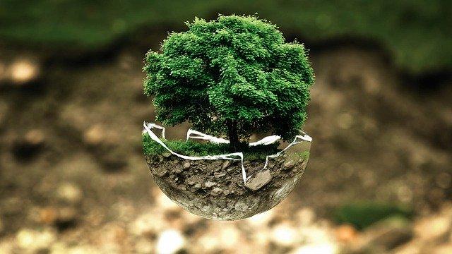 strom, příroda